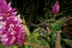 orquideas-ppal